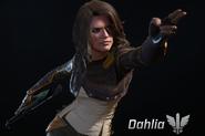 Selection Dahlia