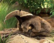 Anteater jungle room