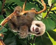 Jungle room sloth