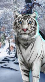 Takao-whitetiger