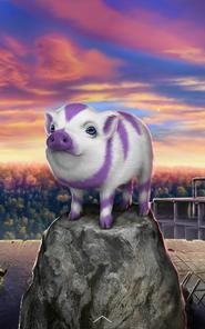 Strange Mini Pig
