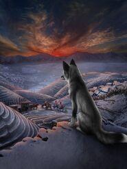 LOW Pearl fox