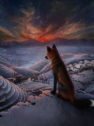 LOW Amber fox