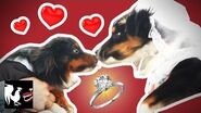 Dog Wedding The Dumbest Thing We've Ever Done RT Life