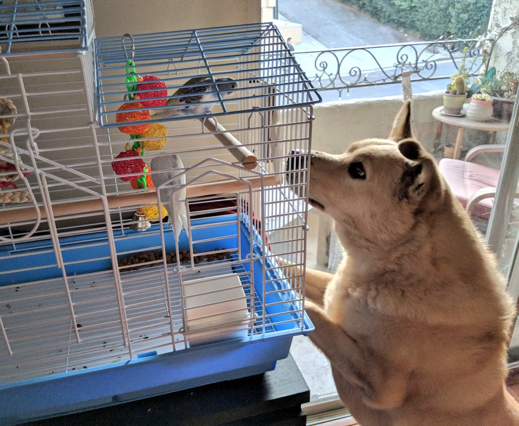 Benson and Budgies.png