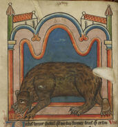 Bear licking a cub into shape - Bestiary (1230-1240), f.15v - BL Harley MS 4751