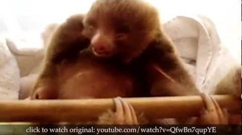 True_Facts_About_Sloths