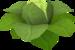 Brassica Prime.png