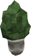 Small evergreen.png