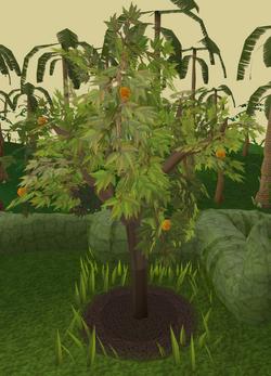 Orange tree 7.png