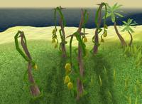 Vanilla plant.png