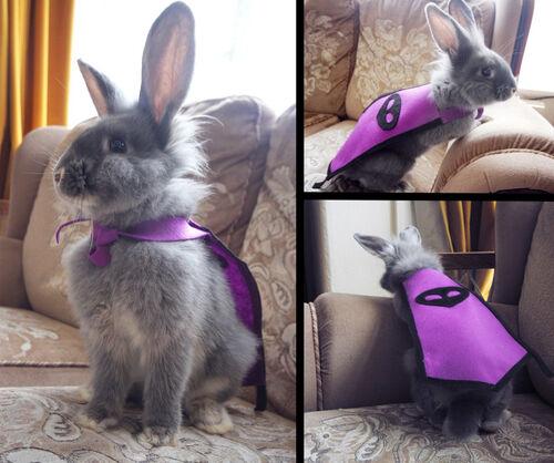 Loki the 99 Thieving Rabbit news image.jpg