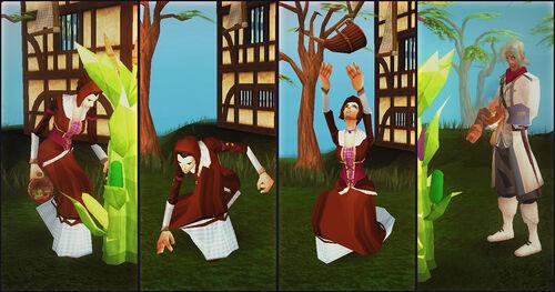 Harvest Festival plant news image.jpg
