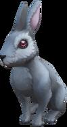 Piscatorian cottontail rabbit (NPC)