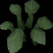 Dock leaf built