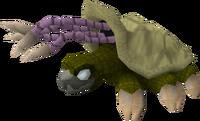 Warped tortoise.png