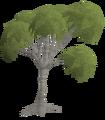 105px-Eucalyptus Tree