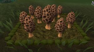 Morchella mushroom5.png