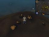 Treasure Trails/Guide/Cryptics