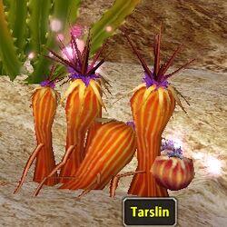 Tarslin.jpg