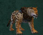 Card - Forest Leopard.jpg
