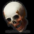 Human Skull.png