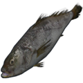 Small Trout.png