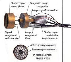 Photoreceptor.jpg