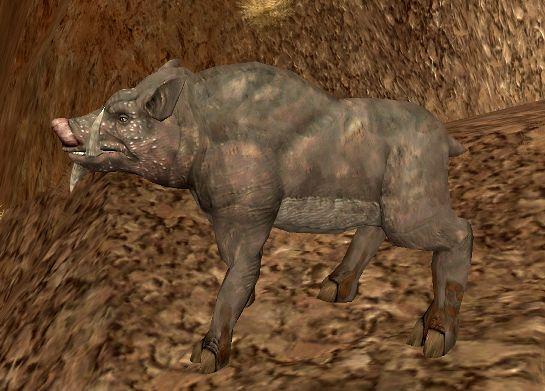 Зукка-свинья