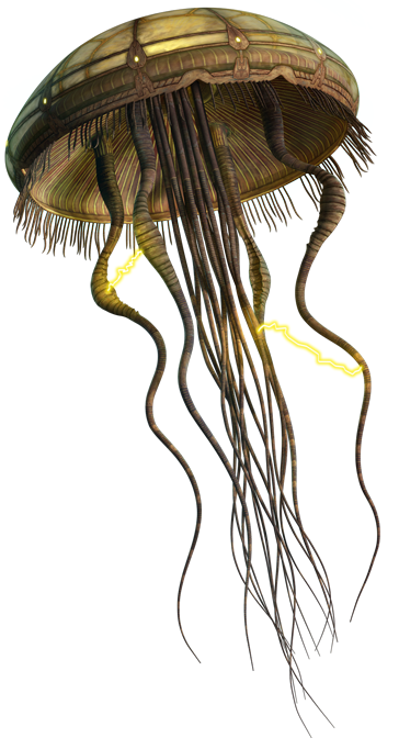 Hydroid medusa.png