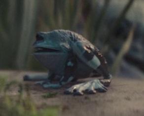 Сорганская лягушка
