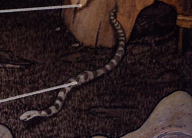 Лианная змея/Канон