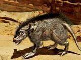 Вомп-крыса