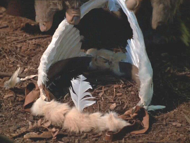 Белые крылья надежды