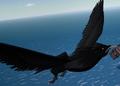 V6 Qrow Bird ProfilePic