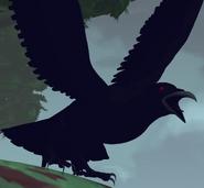 Vol4 Raven Bird