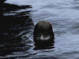 Tod im Wasser
