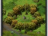 Круг деревьев Флорентины