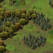 Брэйвсбури, поляна браконьеров