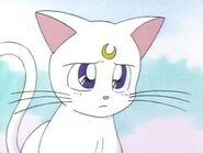 Artemis triste