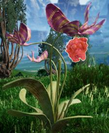 Paläobeerepflanze.png