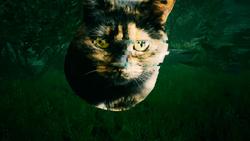 Arachnophobia Cat.png