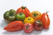 Tomates-anciennes-la-Super-Halle-dOullins