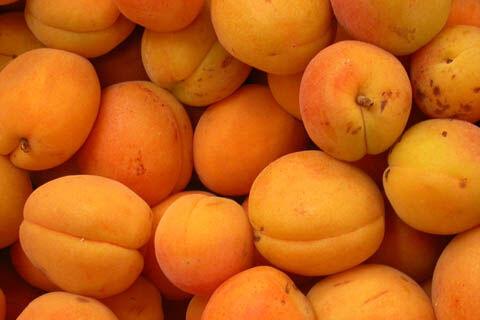 Abricot-1.jpg