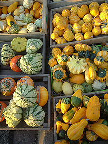 220px-Petites courges.jpg