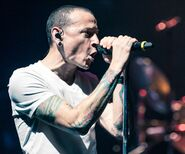 Chester6