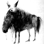 A New Horse