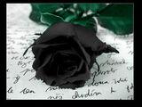 Die schwarze Rose