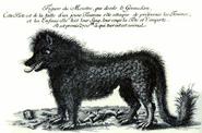 Bestie von Gévaudan 2