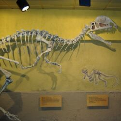 "Dilophosaurus (""Two Crested Lizard"")"